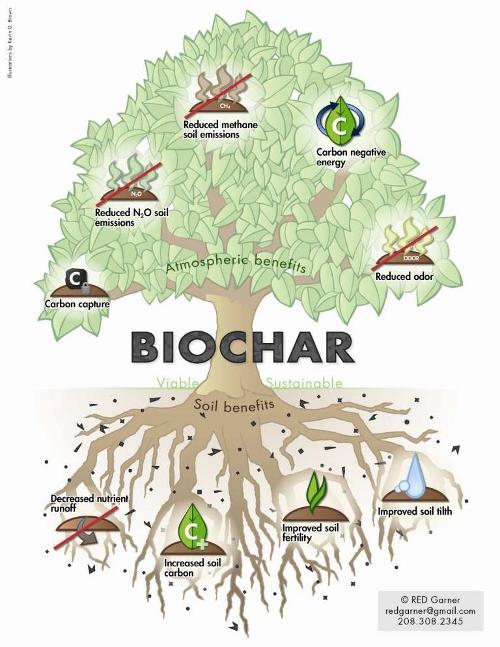 biochar_tree